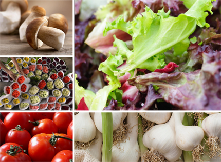 vacuum cooler for lettuce, tomatoes, mushrooms, flowers, vegetables, fruits, bakery products and ready meals.
